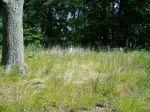 grassy_springs_overgrown13